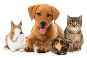 Animal and Pet